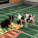 Puppy Bowl Coming to CityScape