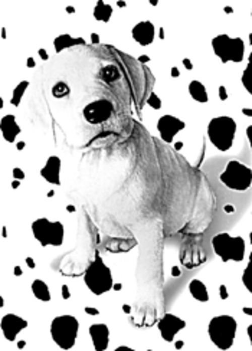 Spotless plot: Oddball, a pup without the requisite spots, is one of the stars of 102 Dalmatians.