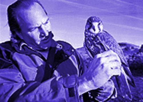 Although Jerry Ostwinkle lost his license to fly raptors from the U.S., he is able to obtain birds like CoCo, who comes from Saudi Arabia and is not under the jurisdiction of the U.S. Fish and Wildlife Service.