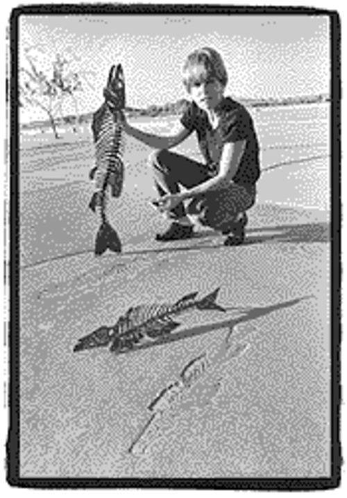 Artist Laurie Lundquist's imprints of fish along Tempe's Rio Salado trail would be considered construction, not art, under the state's tax ruling.