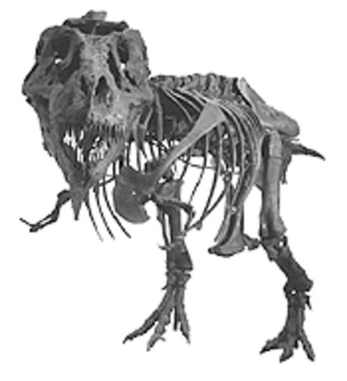 """A T-Rex Named Sue"" stands tall in Mesa Southwest Museum's new exhibit."