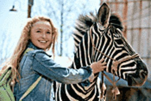 Horsing around: Hayden Panettiere wants to turn a  zebra (voiced by Frankie Muniz) into a race horse in  Racing Stripes.