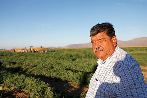 Santiago Gonzalez, farming since he was a child, surveys one of the fields that make up 3,330 acres of farmland that he and his family own in the West Valley.