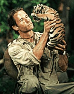 Tiger by the tail: Guy Pearce with one of the stars of  Two Brothers.