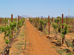 Winemakers Maynard James Keenan and Eric Glomski use fruit from their vineyards in Willcox to make Arizona Stronghold wines.