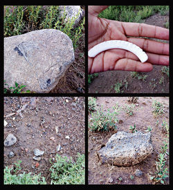 Bone fragments, jewelry (including a broken shell bracelet, top right), and pottery are remnants of an ancient adobe civilization devastated when Arizona Game and Fish started construction on a community fishing pond.
