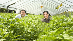 Field of dreams: Wexler and Curtiss stop to smell the basil.
