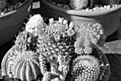 Cactus? They hardly know us!