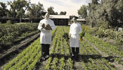 Down on the farm: Chef Greg LaPrad (left) and sous chef Anthony Andiario take their pick.