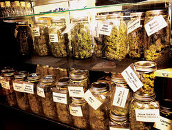 High-quality marijuana buds line the shelves at Nature's Own Wellness Centers in Colorado. Owner Travis Pollock plans to run a dispensary in Arizona.