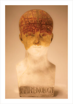Female Phrenology Bust