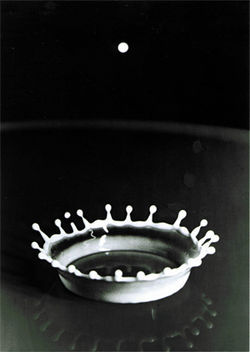 Milk-Drop Coronet, by Dr. Harold E. Edgerton.