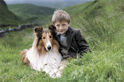 A boy and his dog: Jonathan Mason co-stars with the lovable collie in Lassie.