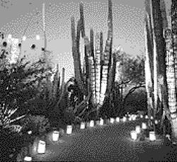 All aglow: The Botanical Garden celebrates Las Noches de las Luminarias.