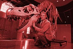 Tray Mead, administrator of Mesa Southwest Museum, shows off a Tyrannosaurus rex skeleton in the museum lobby.