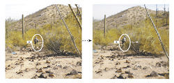 Puroll stands about 30 yards downhill from where, he says, he was standing when an alleged dope smuggler stepped out from the brush and shot him. Right: Puroll says he struck his assailant with return fire from where this photo was taken a