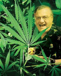 Can you find Sheriff Joe behind this pot plant? Dennis Burke can't.