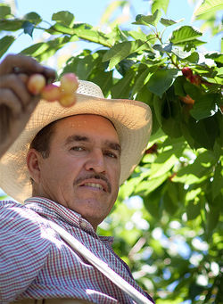 Rosalio Moreno moved to Washington three years ago from California to start an orchard.