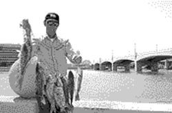 Casting call: Anglers are invited to fish for trout in Tempe.